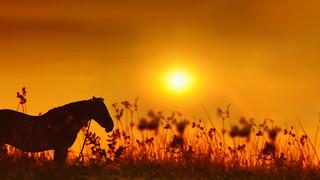 SL22 Horse in Field