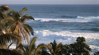 SO12 Palm Trees