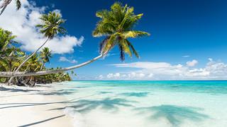 SO3 Palm Beach