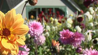 SF9 Blooming Gardens