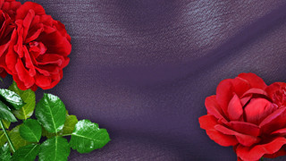 SF13 Red Roses
