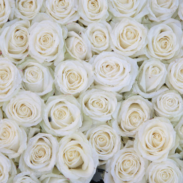 White Rose Wall
