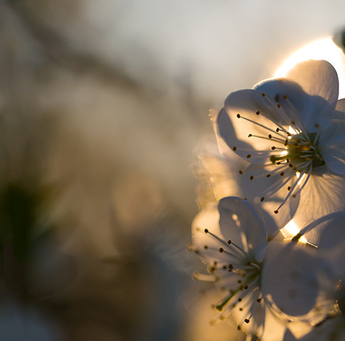 Flowers and Trees.jpg