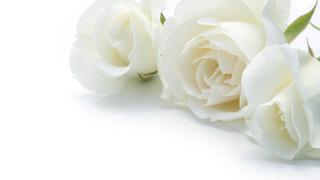 SF2 White Rosebuds