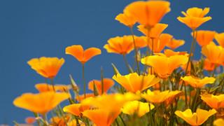 SF6 Field of Orange