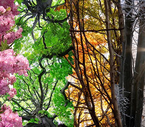Nature's Seasons