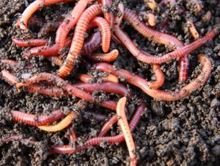 Worm Bin Composting