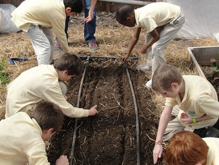 Planting Spring Spinach