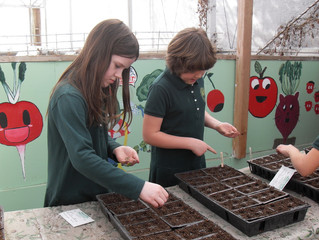 Spring Seed Planting