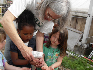 Planting Seeds in the Greenhouse