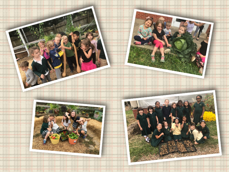 So much fun harvesting our crops in the Garden of Bliss. The Kindergarteners found