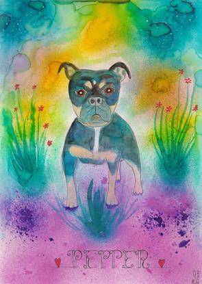 Pepper, the Olde English Bulldog