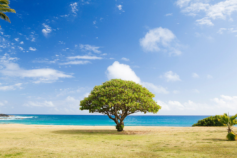 A green tree blossoming next to the sea