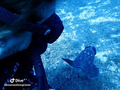 diving site Secca dell Cernie sardinia