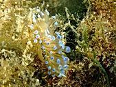 diving site Coticcio sardinia
