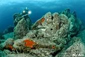 diving site Thaiti sardinia