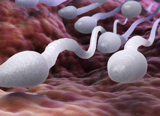 CANNABIS : Le sperme en perd ses gènes