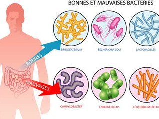 MICROBIOTE : Comment les fibres alimentaires nous protègent