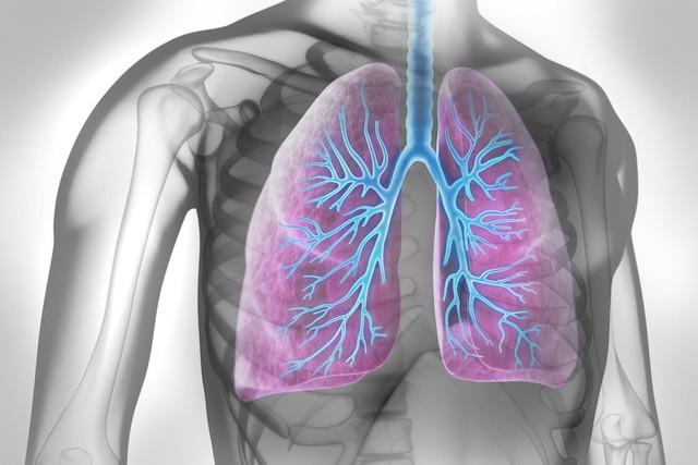Asthme et obésité | Institut de formation 100-T