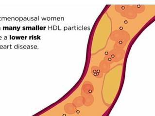 MÉNOPAUSE : Pourquoi le bon cholestérol n'est pas toujours cardioprotecteur