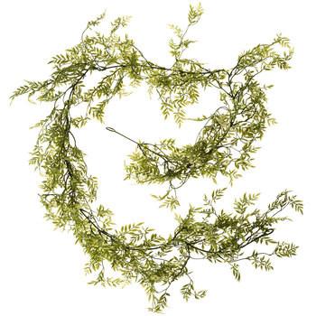 Ficus Garland- $2 each QTY 10