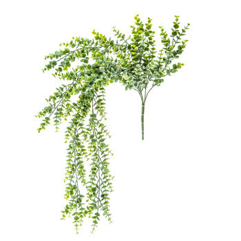 Hanging Eucalyptus Bush- $15 for all (includes-4)