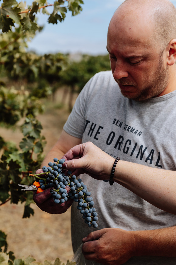 Michael Papps in the vineyard 2