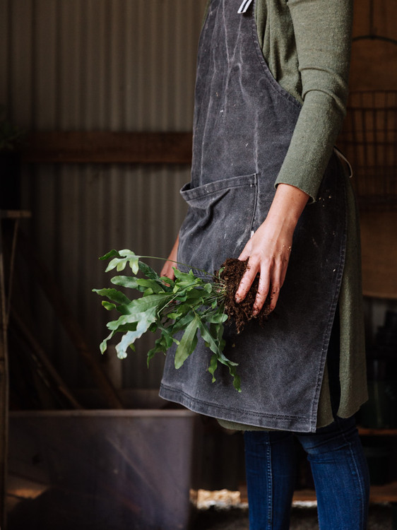 The Green Bumblebee - Adelaide Hills Plantologist