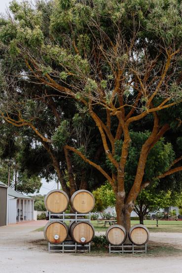Barrels under the tree