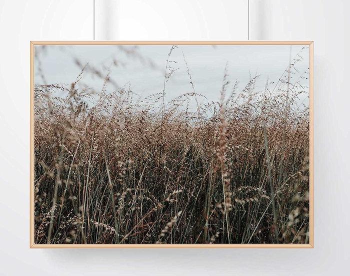 The Island Grass 2