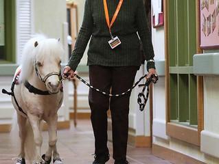 Miniature horse brings smiles to seniors at Woodstock's Valley Hi Nursing Home