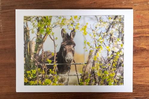 Pretty Donkey