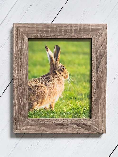 Framed Print of a beautiful Hare - A4