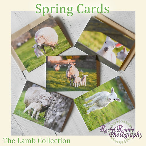 Spring Cards - Cute Lambs - Pack of 5