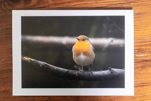 Handsome Robin