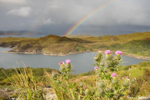 Rainbow over Loch Nedd