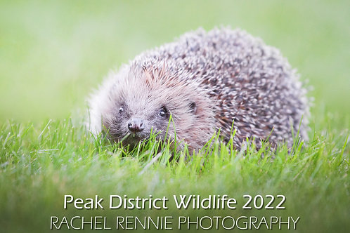 Peak District Wildlife Caldendar A4