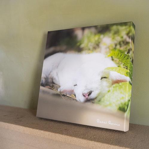 Gorgeous Sleepy Lamb Canvas