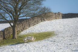snow april 2021-5.jpg
