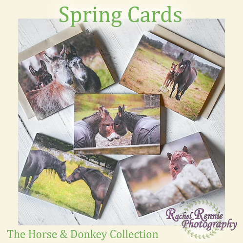 Spring Cards - Horse & Donkey collection - Pack of 5