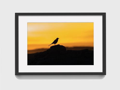 Bird posing in the sunset