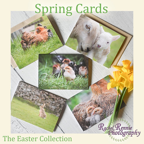 Easter Greeting Cards - Pack of 5