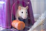 Ratatouille 3.jpg