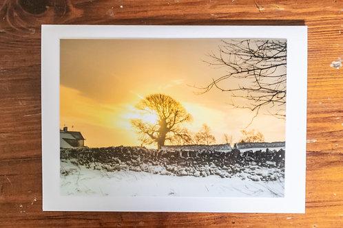 Snowy Sunset Tree