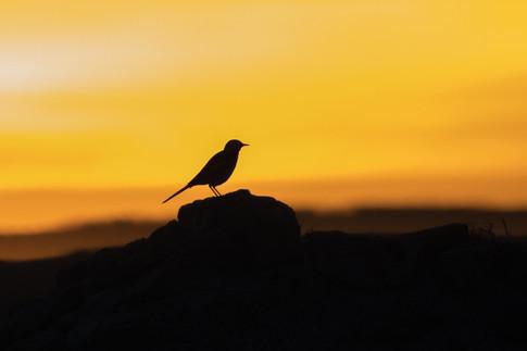 Bird in sunset