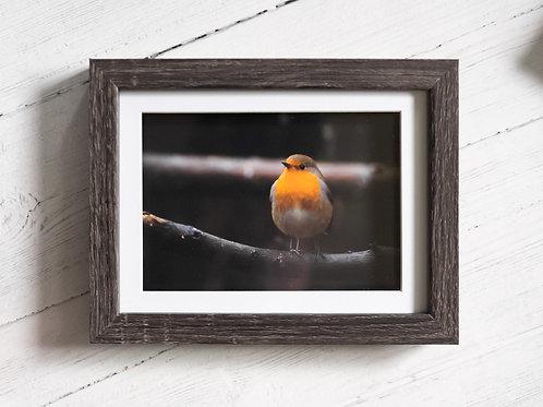 """Framed """"Robin"""" - 7x5"""""""