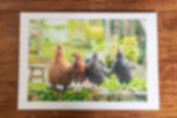 cards-12.jpg