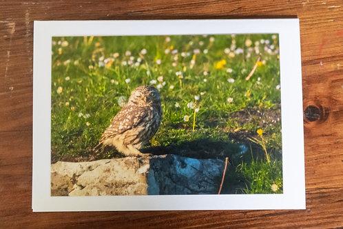 Cheeky Little Owl