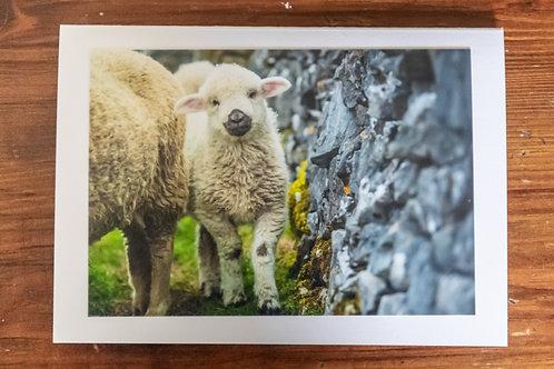Fluffy Lamb