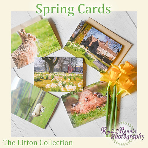 Spring Cards - The Litton Collection - Pack of 5